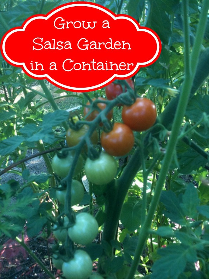 How to Grow a Salsa Garden in a Container