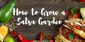 On a sunny day it is nice to relax with a margarita and homemade chips and salsa. Learn how to grow a salsa garden with this easy tutorial.