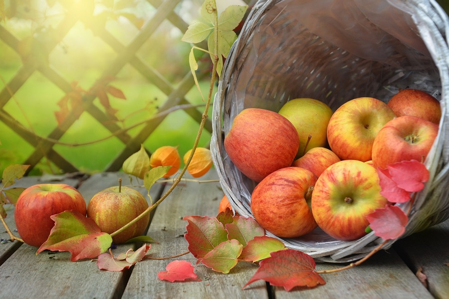 Fall Recipes A Bunch of Apples Falling Out of a Tipped Over Bucket