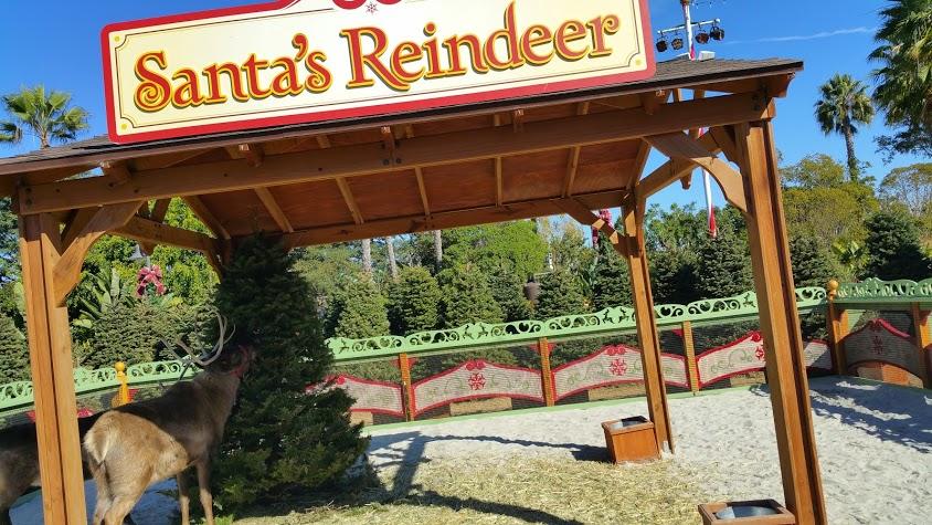 Santas Reindeer at SeaWorld San Diego