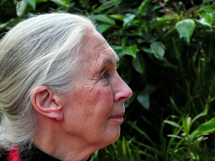 Jane Goodall Panasonic Lumix ZS60 Camera