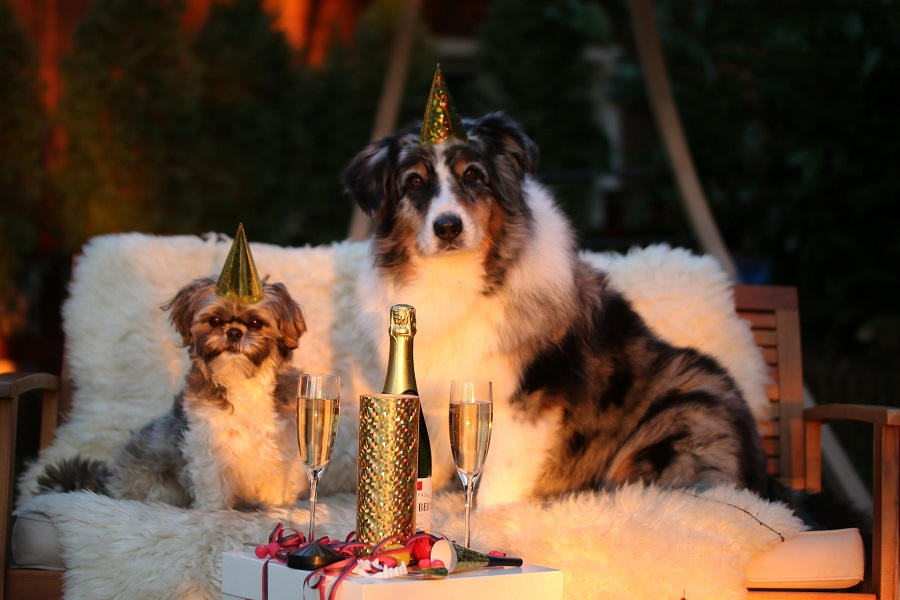 DIY New Years Decorations to Ring in the New Year Two Dogs Sitting on an Outdoor Couch with Party Hats on and Champagne in Front of Them