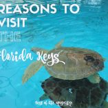 The reasons to visit Florida Keys extend far beyond the common reasons of fishing and snorkeling. Here is your guide to visiting the Florida Keys! What to do in Florida | Things to do in Florida | Things to do in The Florida Keys | What to do in The Florida Keys | Travel Ideas | Things to do When Traveling