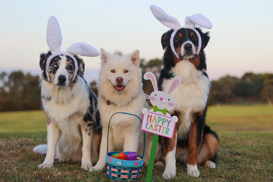 Dairy Free Easter Candy Recipes Three Dogs Wearing Bunny Ears with a Sign That Says Happy Easter