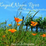When you kayak Napa River, you take in Downtown Napa from a different perspective offering a deeper appreciation for the popular wine lover destination. Things to do in Napa | Napa River Tours | Napa Tours | Napa Travel Tips | Northern California Travel Tips | Things to do in Northern California