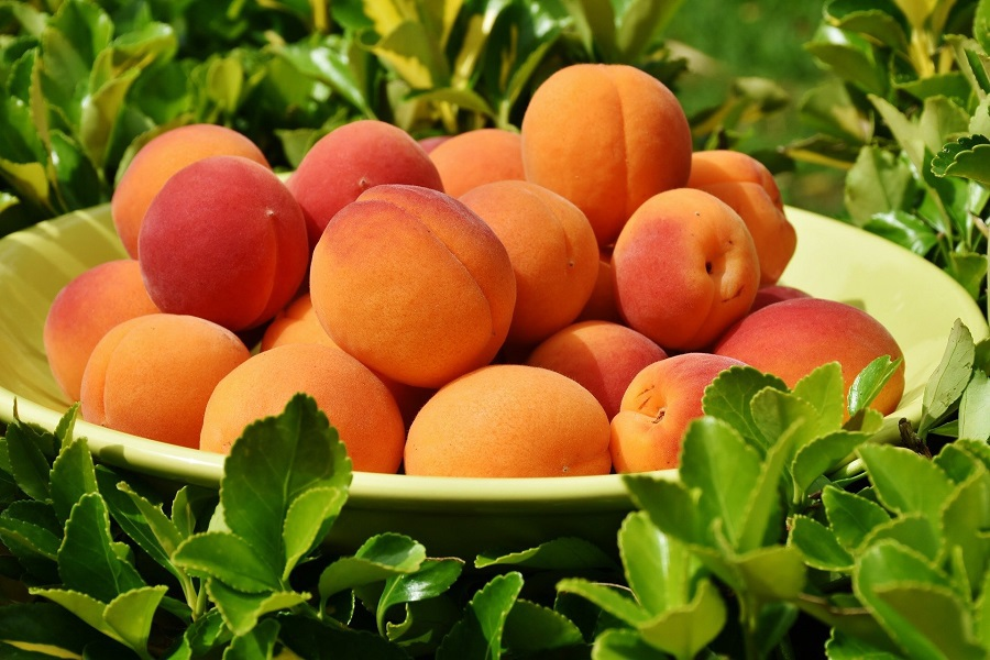 Crockpot Peach Cobbler Recipes a Platter of Peaches Surrounded with Plants