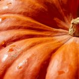 Crockpot Pumpkin Dump Cake Recipes Close Up of a Pumpkin