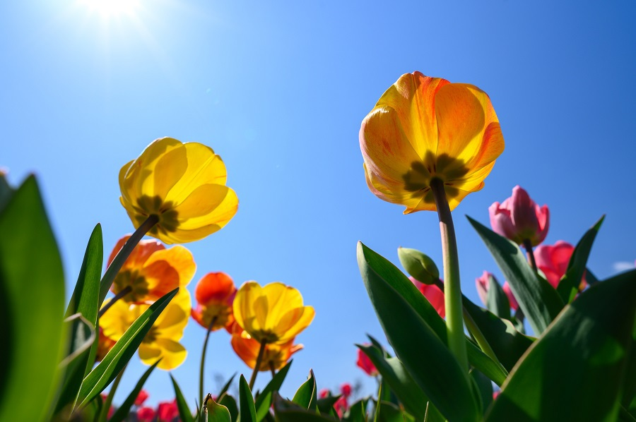 Colorful Margaritas for Spring Flowers Shining in the Sun